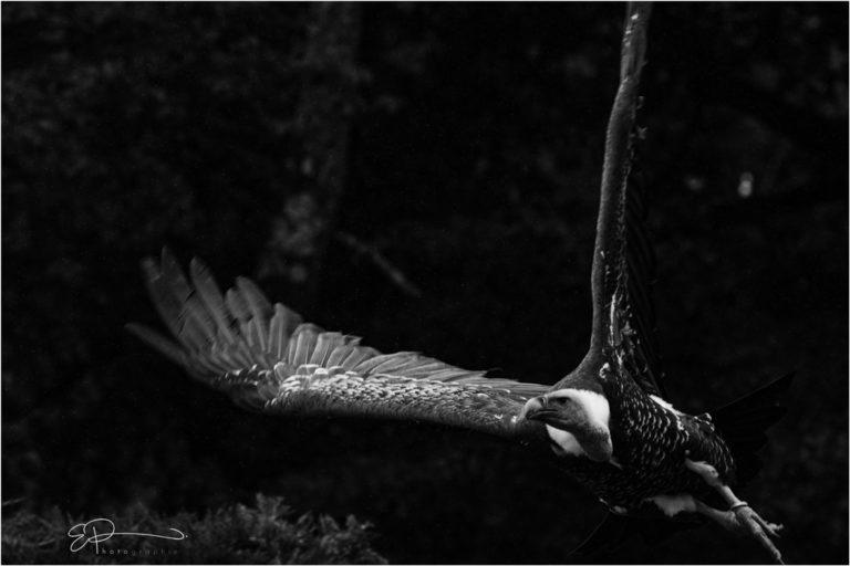Eric pietralunga photographe wildlife